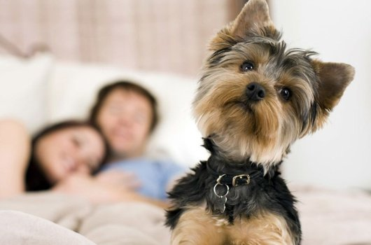 The hotel admit pets up to 15 kg for € 30 ...